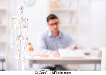 studing, monde médical, squelette, étudiant