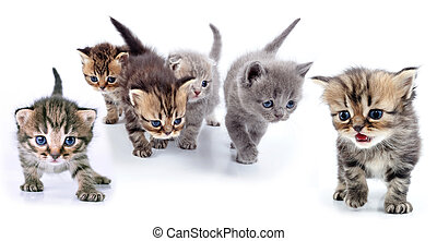 studio isolated portrait of large group of kittens against ...