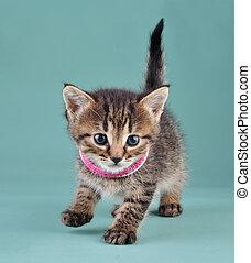 studio portrait of little kitten with Indian bracelets