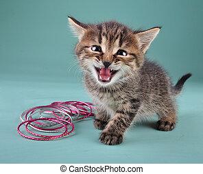 studio portrait of little kitten with Indian bracelets -...