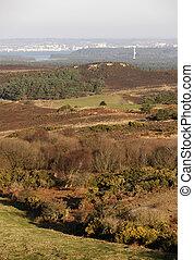 Studland heathland, Dorset, UK