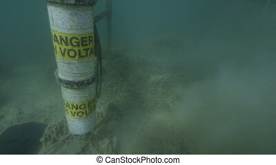 Studying corals underwater - An underwater shot of...