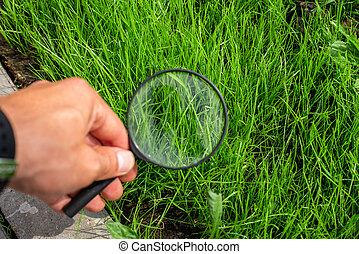 Studying of a green grass through a magnifying glass in a male hand, ecology, botany