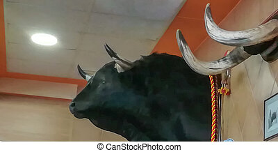 Stuffed bull head hanging on the wall