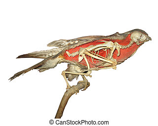 stuffed falcon skeleton over white background