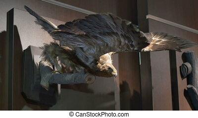 Stuffed Hunted Eagle - Hunted eagle stuffed and exposed on a...