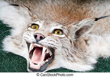 Stuffed lynx - Shot of stuffed lynx with open mouth
