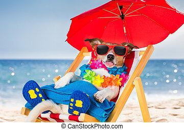Stuhl, sandstrand, hund,  siesta