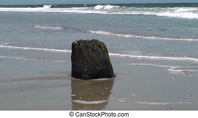Stump at low tide