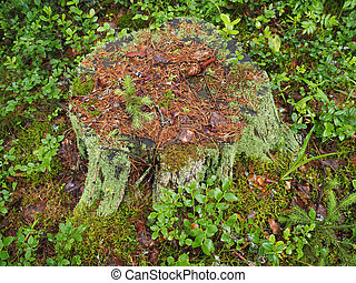 stump in the forest