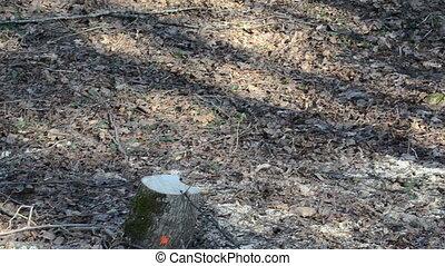 stump logs forest cut
