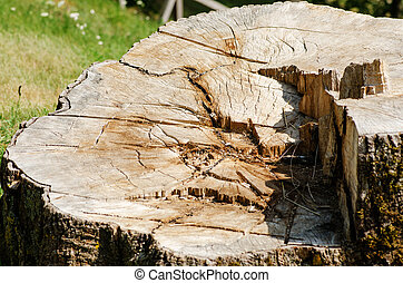 Stump of a tree