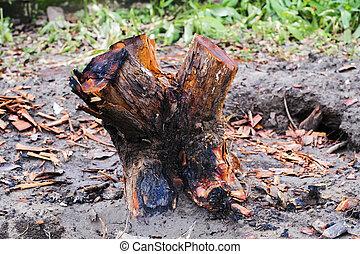 stump of tree