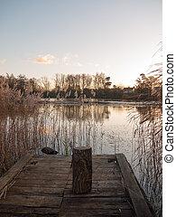 stump of wood bark siting on lake pontoon reeds autumn