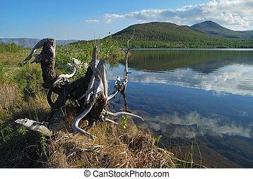 Stump on coast of lake