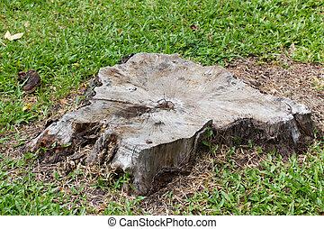 Stump on grass