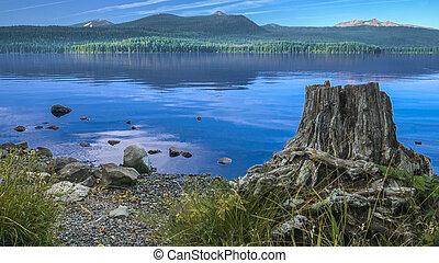 Stump on the Lake Shore