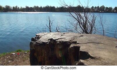 Stump on the lake