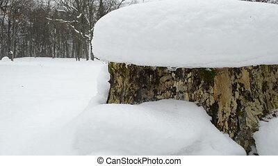 stump snow melt spring