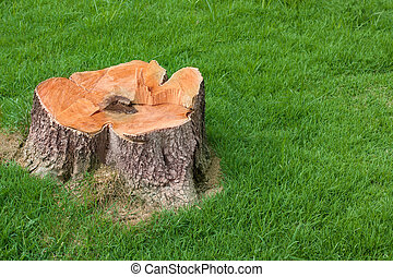 stump tree plant on green field use for gardening topic