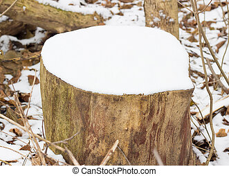 stump under the snow