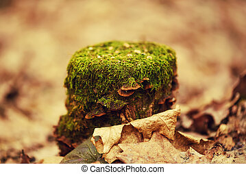 Stump with moss