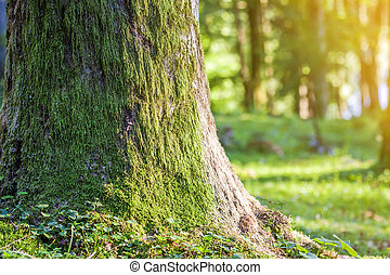 Stump with moss in autumn forest. Old tree stump covered with moss in the coniferous forest, beautiful landscape. Soft light effect. Green nature concept