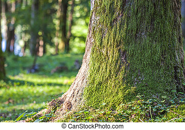 Stump with moss  in the autumn forest. Old tree stump covered with moss in the coniferous forest, beautiful landscape
