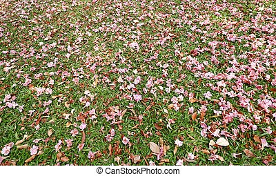 Stump with Pink flowers fall on grass