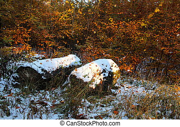 Stumps with snow