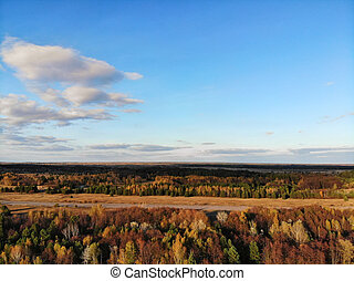 Stunning aerial view of forest in autumn colors