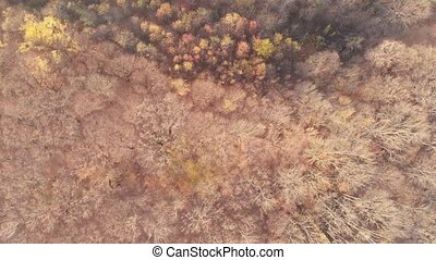 Stunning autumn forest from above. Colorful multi-colored treetops, view from the drone 4k