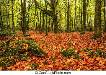 Stunning bright Autumn Fall forest