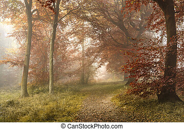 Stunning colorful vibrant evocative Autumn Fall foggy forest landscape