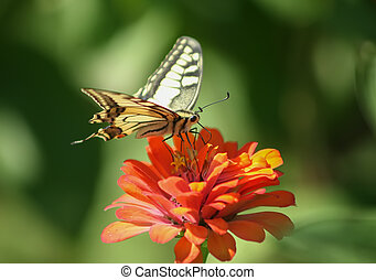 colourfull butterfly on flower - Stunning colourfull...
