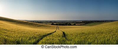 Stunning countryside panorama landscape wheat field in Summer su