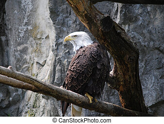 Stunning Eagle on a Rotten Tree