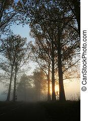 Stunning foggy landscape