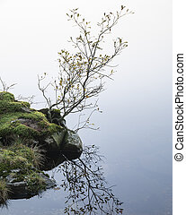 Stunning intimate landscape image during Autumn Fall of small tree growing against calm lake in background