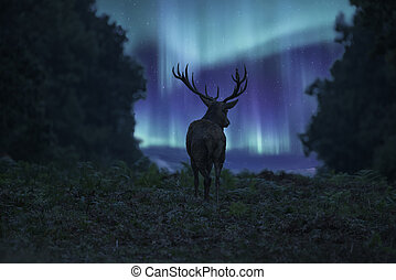 Stunning landscape image of red deer stag silhouetted...