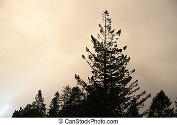 Stunning landscape image of silhouette pine tree against stunning atmospheric Winter sky