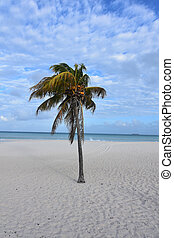 Stunning landscape of eagle beach with white sand
