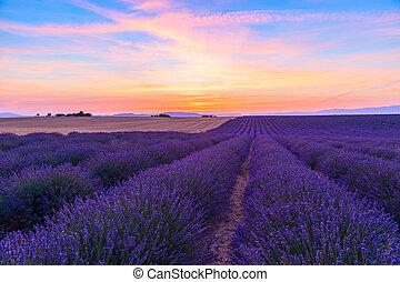 Stunning landscape with lavender field at sunset near Valensole, Provance. France