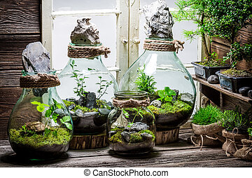 Stunning rain forest in a jar as new life concept