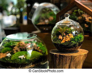 Stunning rain forest in a jar