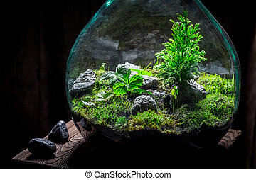 Stunning rain forest in a jar with self ecosystem