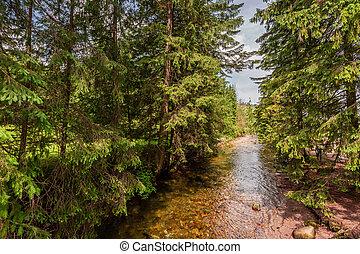 Stunning small stream in Koscieliska valley in Tatra mountains