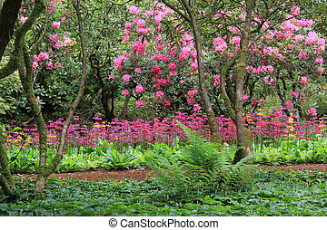 Stunning spring garden in full bloom with Rhododendron, ...