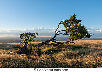 Stunning Summer sunset landscape image of single tree on...