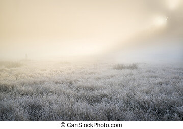 Stunning sun beams light up through thick fog of Autumn Fall frosty landscape